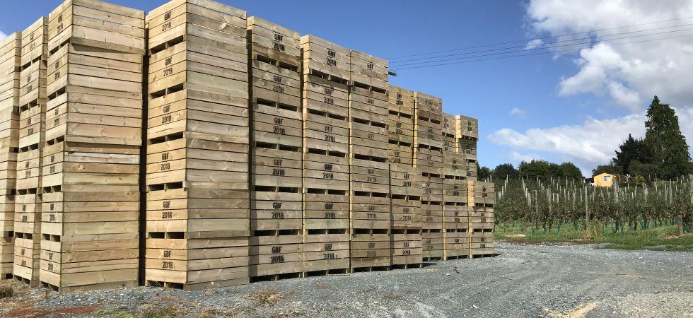 manzanas, nueva zelanda, picking nueva zelanda, apple picking, recoger manzanas, pick