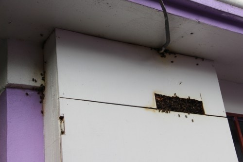 The bee hive in the electric panel