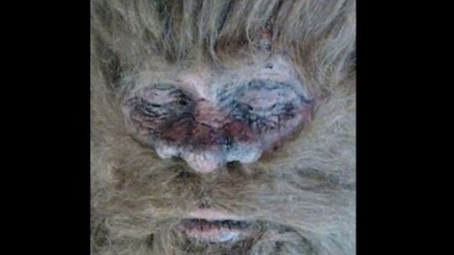 Dead Bigfoot? - Photo by Rick Dyer/BigfootToday.com
