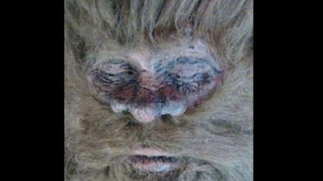 Dead Bigfoot? - Photo by Rick Dyer/BigfootToday.com