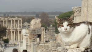 My favorite photo. One of the cats of Ephesus posing for me with the Library in the background.