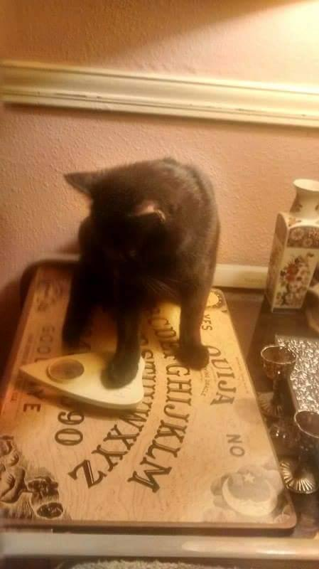 Cat on Ouija by James Maxwell