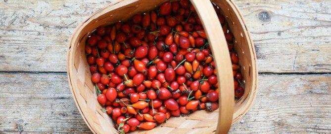 Rezept für eine köstliche Hagebuttenmarmelade aus gesammelten Wildfrüchten