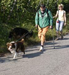Langstockhaar Schferhunde HausBarrettde  Bilder