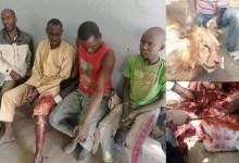 Photo of Zaki Ya kashe Mutane Yakin Ngala A Borno da Raunata Wasu da dama (hotuna)