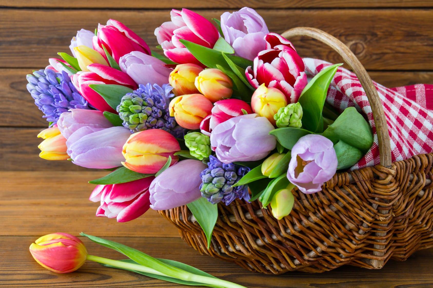 Schnittblumen frisch halten  4 Tipps  Tricks  Haushaltstippsnet