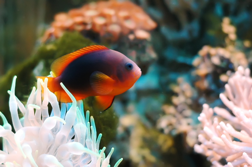 Aquarium bauen lassen  Was Sie dabei bedenken sollten