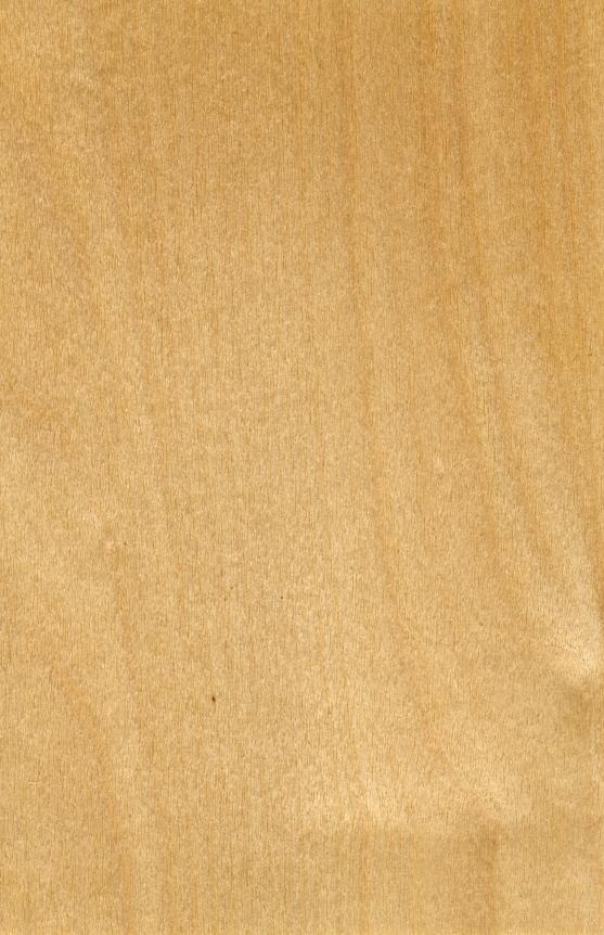 Birkenholz  Preise fr Schnitt und Brennholz