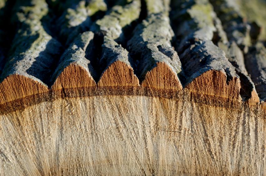 Holz entrinden  Drei Methoden kurz erklrt