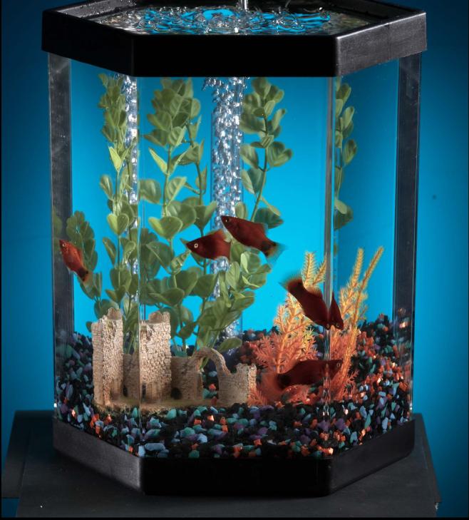 Kaltwasserfische frs Aquarium  Diese Fische eignen sich