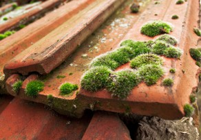 Moos auf dem Dach  Die 4 besten Reinigungsmethoden