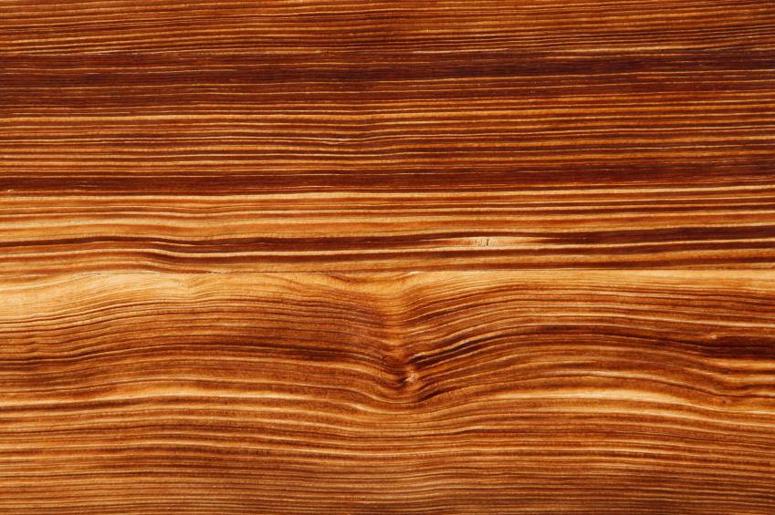 Nadelholz  Die wichtigsten Holzarten im berblick