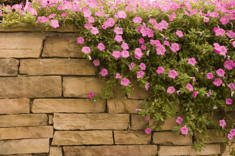 Natursteinmauer im Garten  Bauanleitung in 4 Schritten