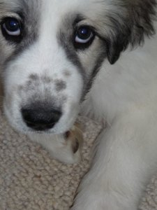 Why a Sad Puppy Face is a Great Marketing Strategy