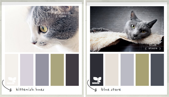 sitting sofa designs leather tear repair color palettes inspired by cats from design seeds ...