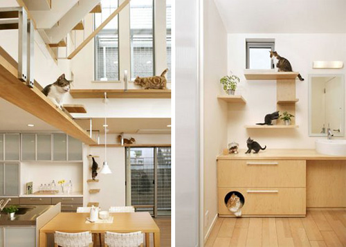 Unbelievable Cat Friendly House Design From Japan • Hauspanther