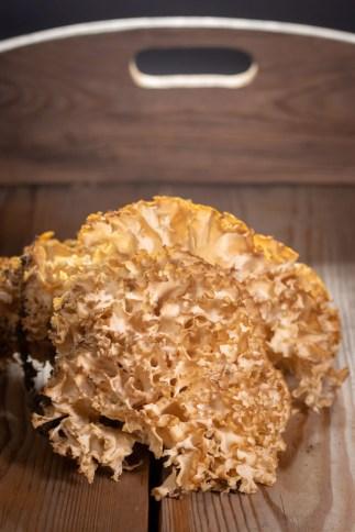 Die Krause Glucke ist ein Speisepilz, der immer unter Kiefern wächst