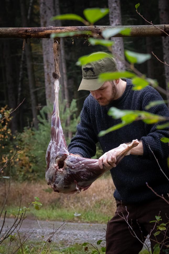 Ein Jäger zertielt ein Reh noch im Wald