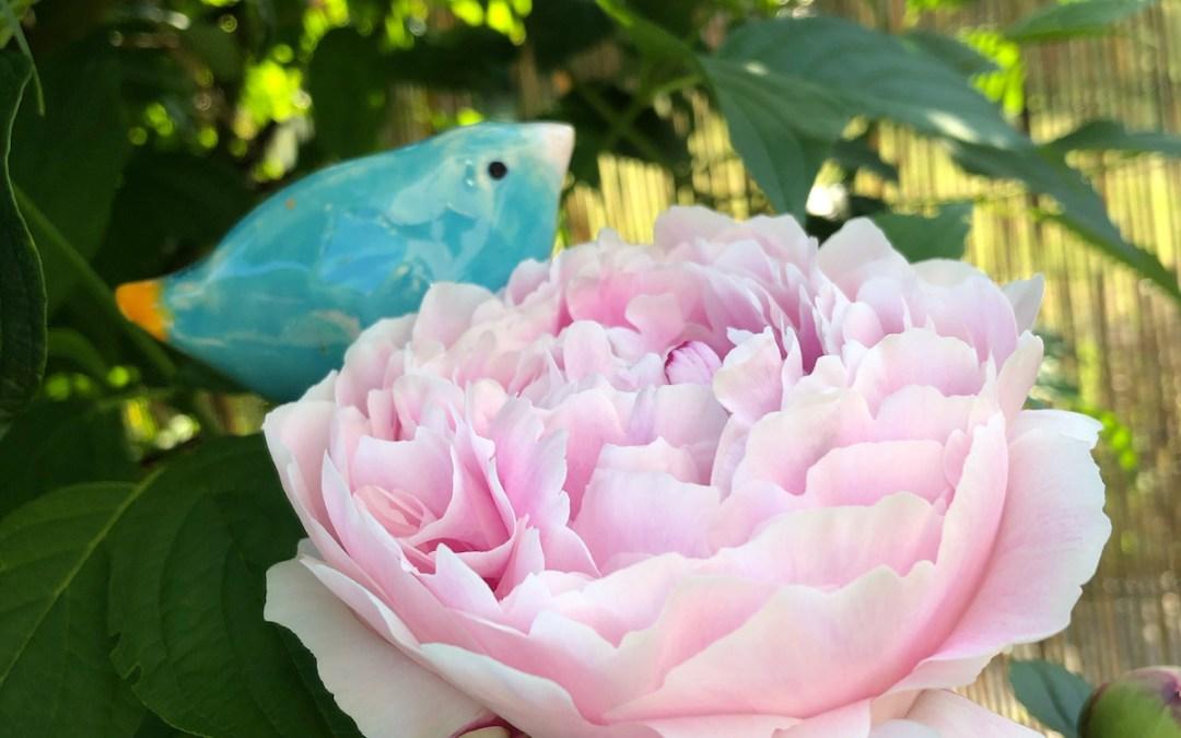 La pivoine et l'oiseau