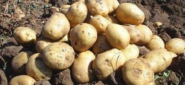 Patates üreticilerine hatırlatma