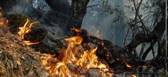 Bahar Geldi Yangınlar Başladı