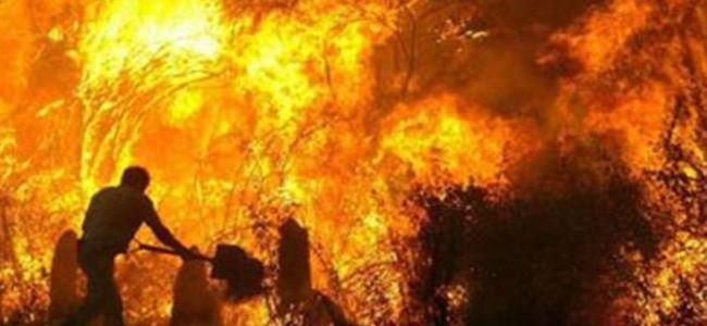 İki ayrı bölgede ağaçlar yandı!