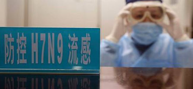 Çin'de yeni kuş gribi paniği