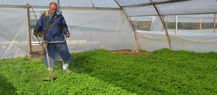 ürün, tarım dairesi, yerli , ilaç