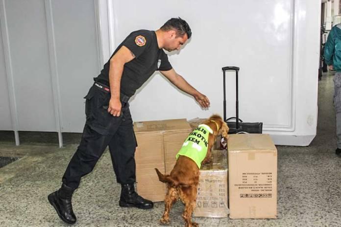 köpek havaalanı