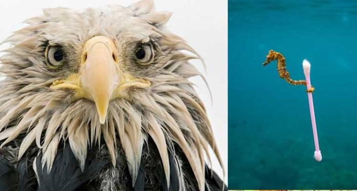 Vahşi Yaşam Fotoğrafları
