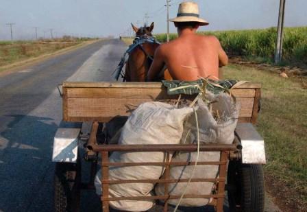 Farmer in Matanzas, Cuba.  Photo: Bill Hackwell