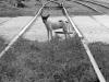 trenes-6