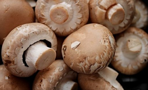 champignons - ready to eat - kastanjechampignons