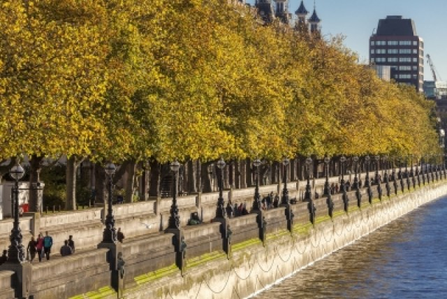 Plane trees might be London's most famous tree, but the city's most common species is the apple tree, mainly hidden in gardens.