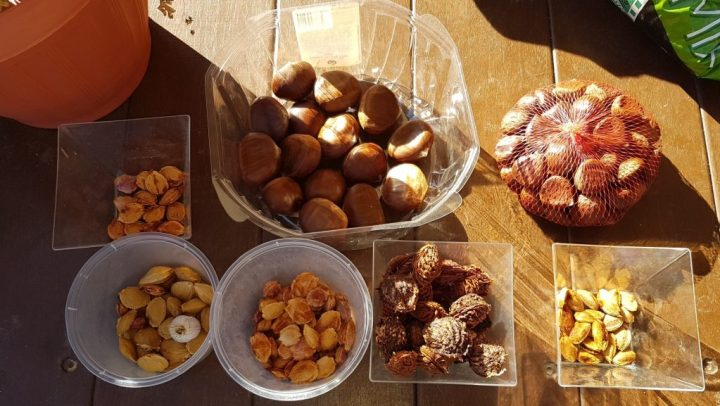 Stone fruits and chestnuts