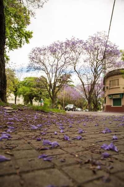 Spring in Rosario.