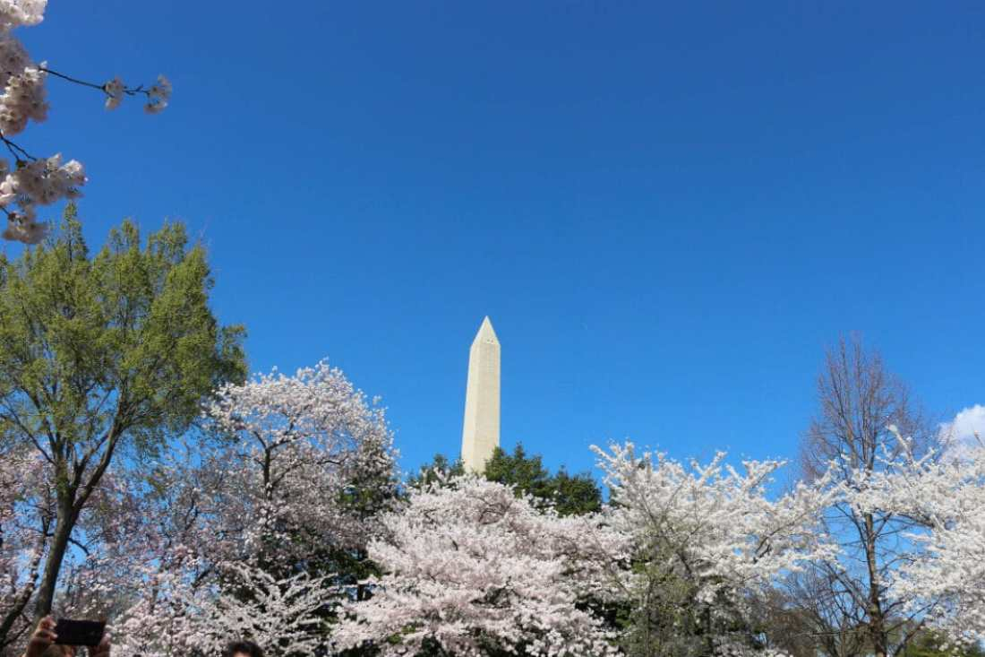 Washington Monument during cherry season