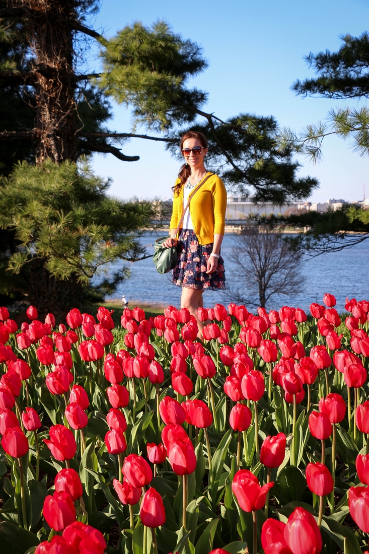 Look at this gorgeous tulip bed near Arlington National Cemetery. Flowers are everywhere!