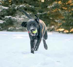 puppy playing in the snow