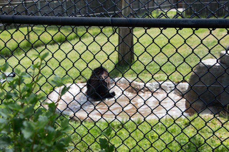 NEW Zoo