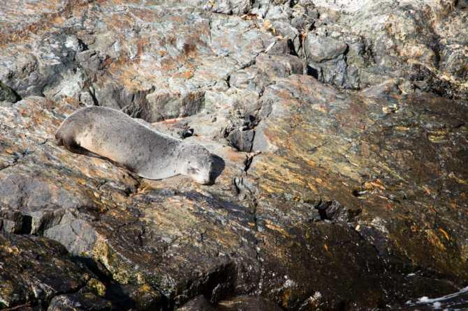 seal Milford Sound