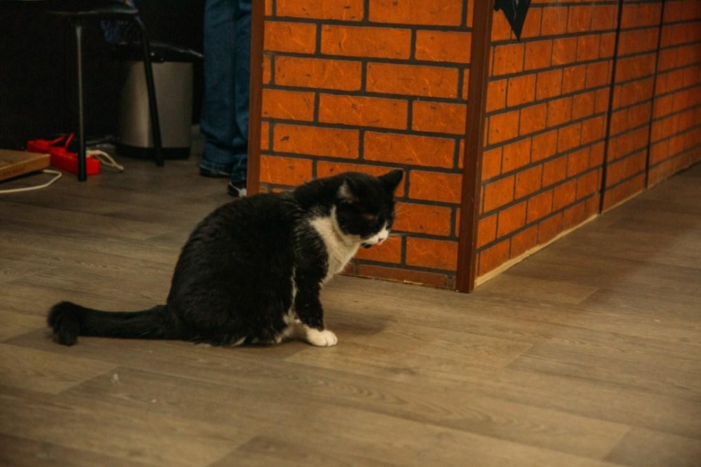 The Vodka Museum's cat