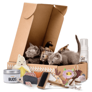 Cat subscription box by litter box