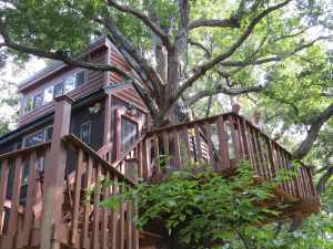White Oak treehouse by Garden of the Gods