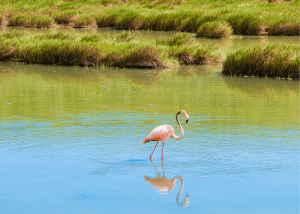 Try Birdwatching in Providenciales
