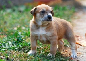 Adopt a Puppy for a Day (Provo)