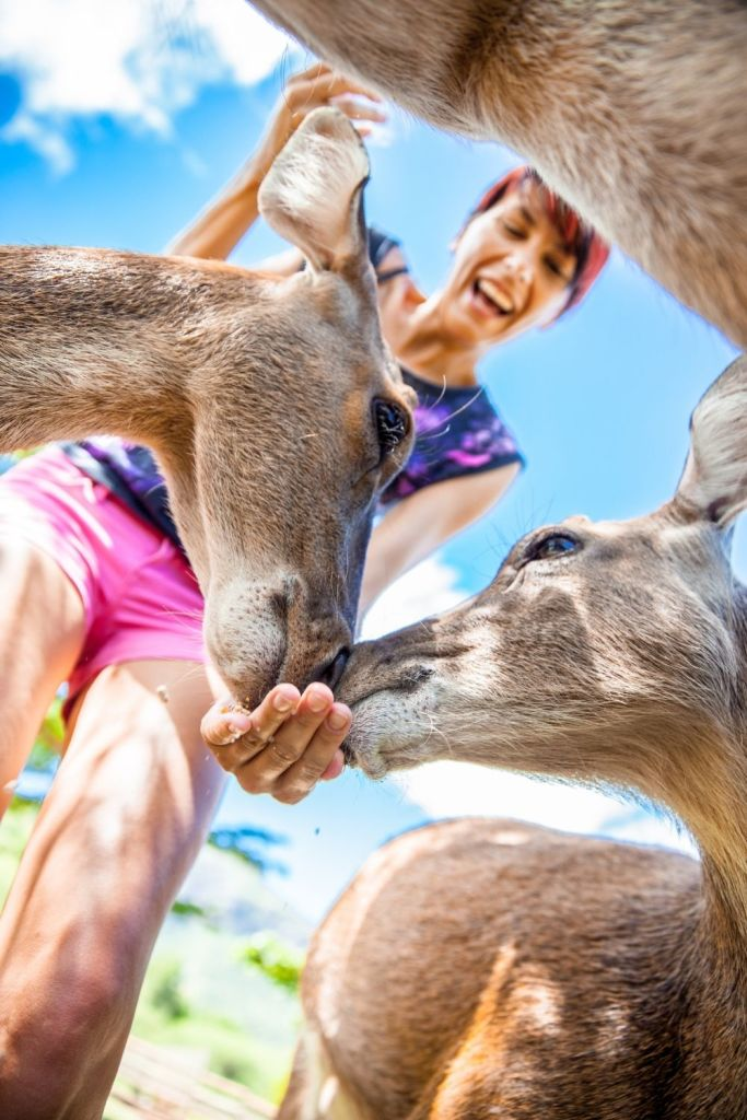 Feed and pet the Deer at the Wisconsin Deer Park in Wisconsin Dells