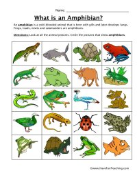 Amphibian Classification Worksheet | Have Fun Teaching