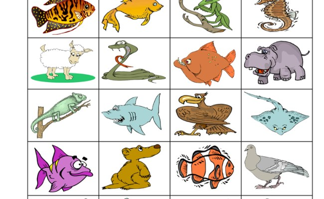 Fish Classification Worksheet Have Fun Teaching