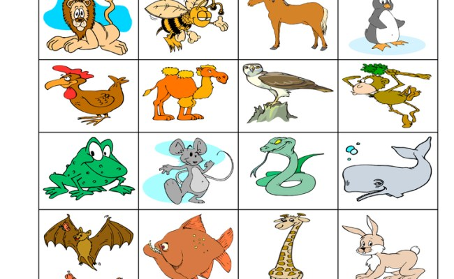Mammal Classification Worksheet Have Fun Teaching
